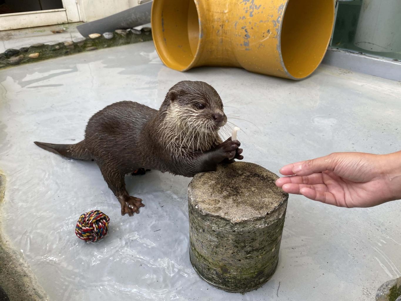 Otter (1).jpg (411 KB)