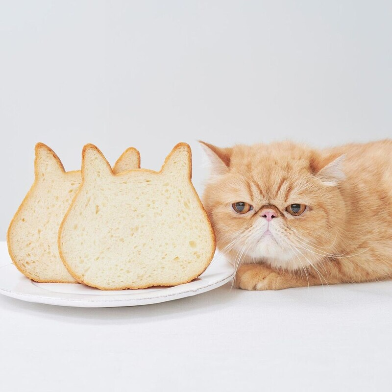 cat toast.jpg (83 KB)