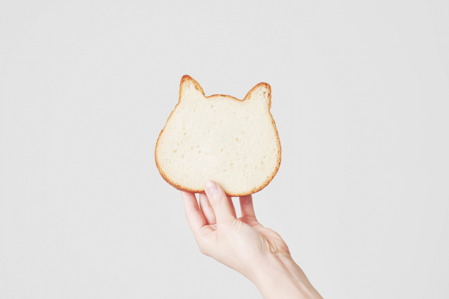 cat toast4.jpg (118 KB)