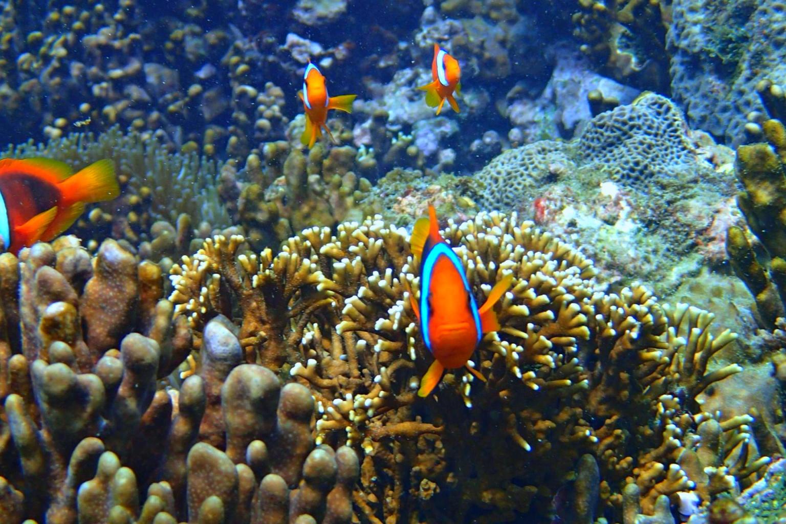 fish.jpg (521 KB)